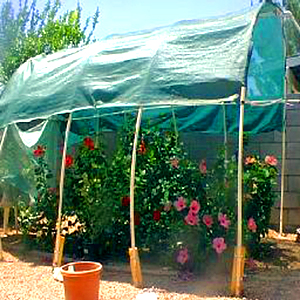 The Very Simplest Greenhouse Frame One-Inch PVC Pipe Bend into a Hoop & Hidden Valley Hibiscus - Build Your Own Greenhouse