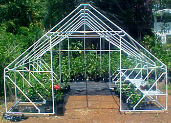 Hidden Valley Hibiscus - Build Your Own Greenhouse