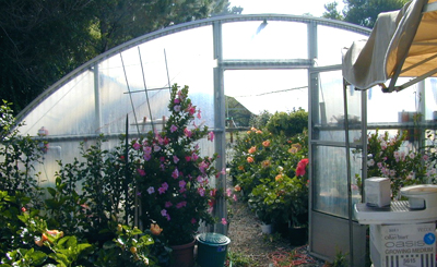 Building A Low Cost Greenhouse
