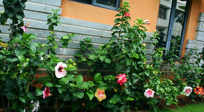 Hidden Valley Hibiscus Worldwide Hibiscus Garden In Bangalore India