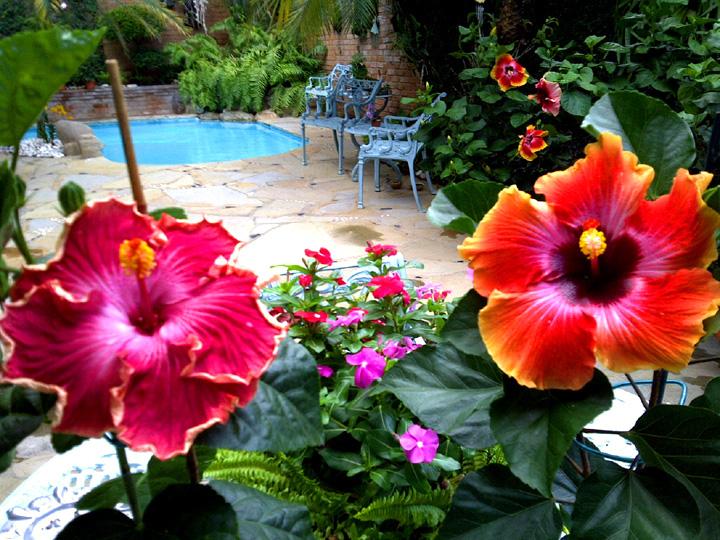 hidden valley hibiscus worldwide hibiscus garden in the dominican republic. Black Bedroom Furniture Sets. Home Design Ideas