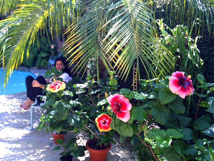 hidden valley hibiscus. Black Bedroom Furniture Sets. Home Design Ideas