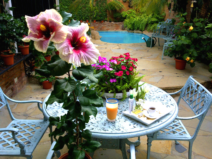 José And Katherine Grow Their Hibiscus In Pots That They Can Move To  Display Around Their Swimming Pool, Patio, In Their House, Or Anywhere They  Like.