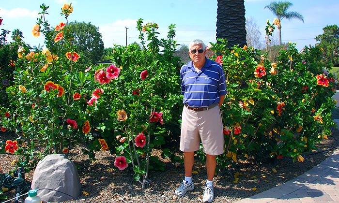 hidden valley hibiscus worldwide hibiscus garden in the orange county california. Black Bedroom Furniture Sets. Home Design Ideas